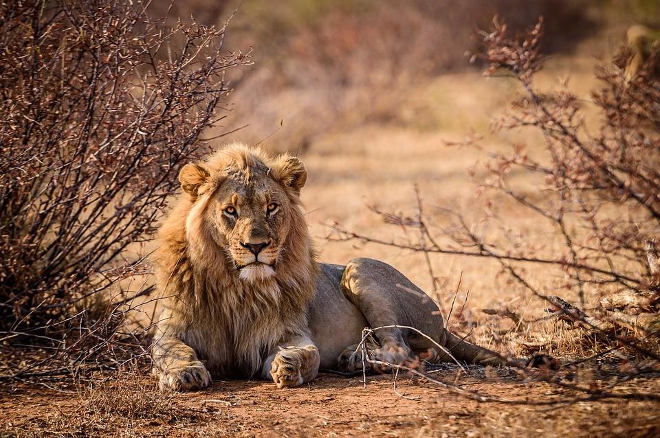 Voyage safari en Afrique : que faut-il savoir avant d'aller ?